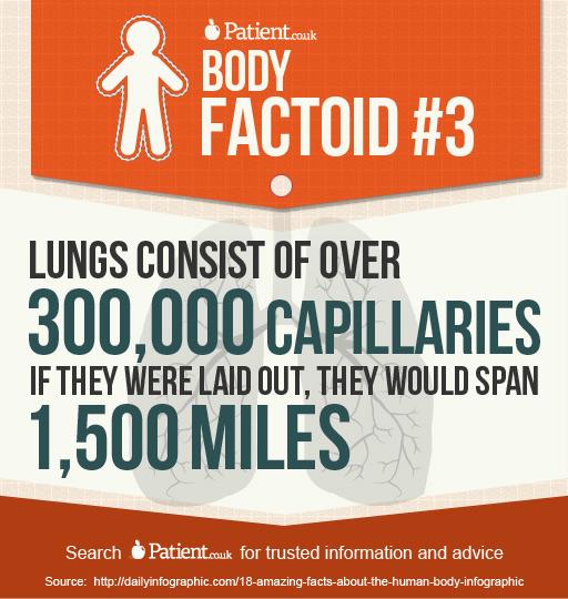 body-factoid#3