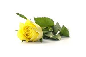 flower-789901_1920
