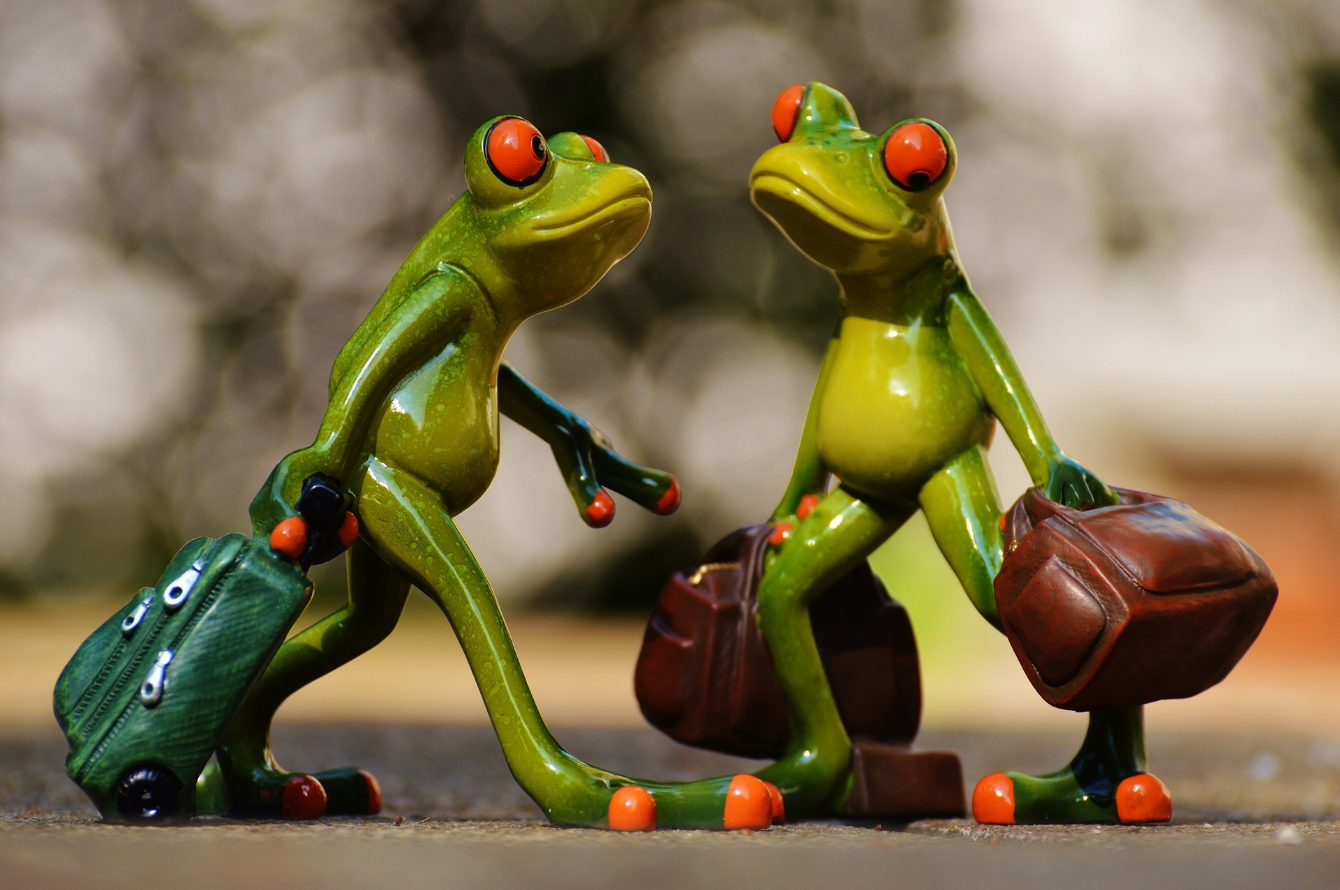 Frogs 897976 1920